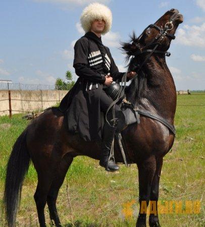 Адыгские лошади в Грузии