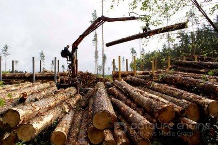 В Адыгее за год почти вдвое снизилось число лесозаготовителей.