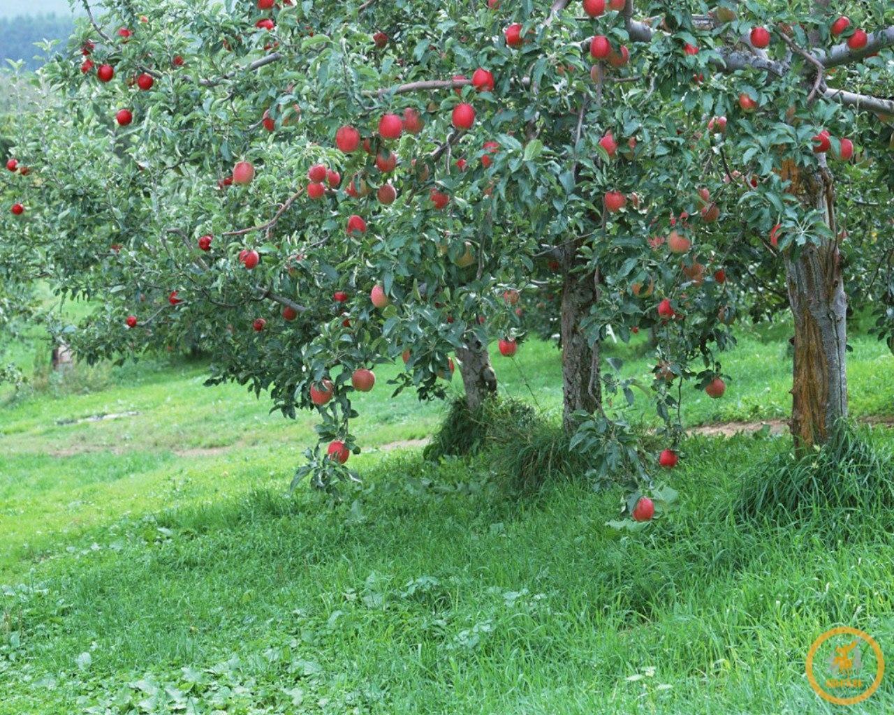 Древние черкесские сады