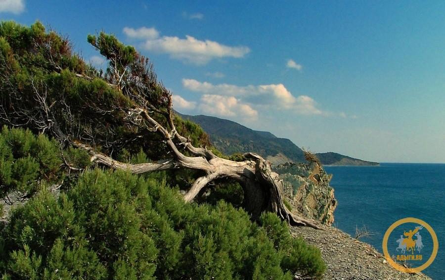 Ассортимент Черноморского леса насчитывает более 10 видов деревьев