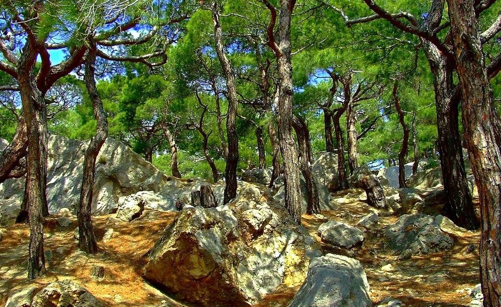 Дерево у древних адыгов ассоциировалась с животными и земными предметами
